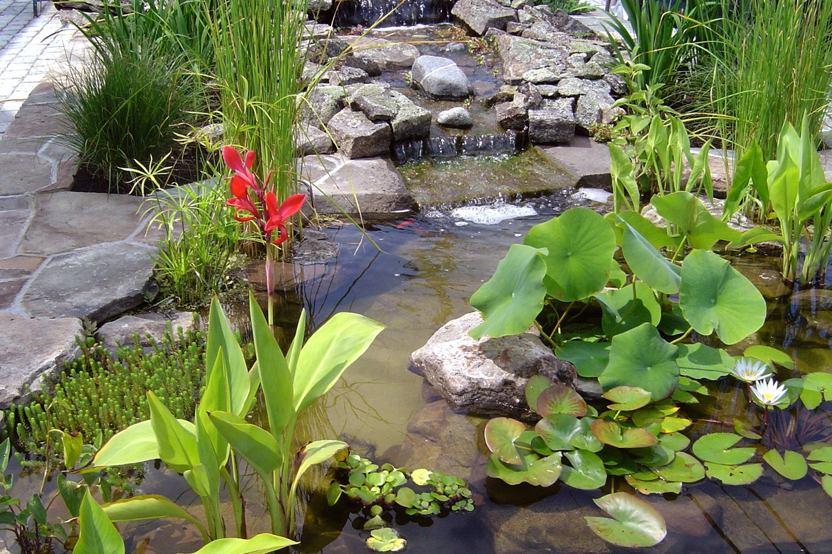 Planted small pond1JPG